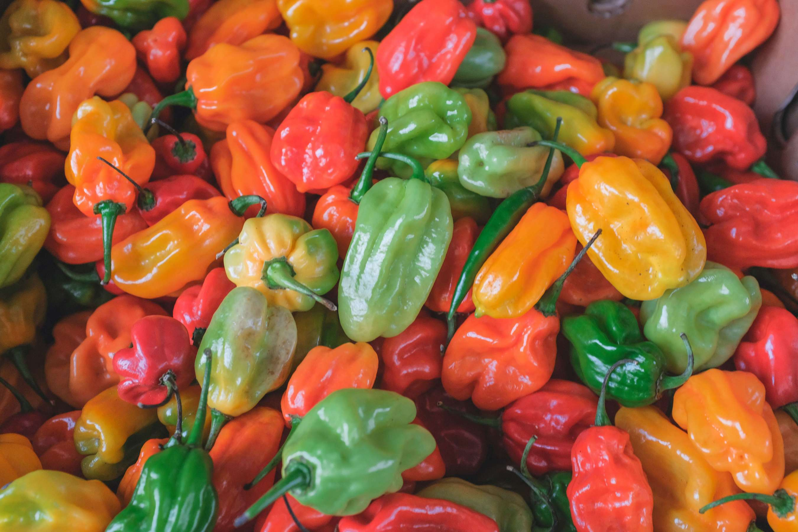 An array of colorful, hot peppers, filled with healing powers and capabilities