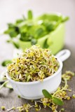 How to Grow your Own Sprouts.