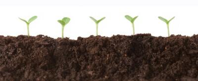plants growing seeds