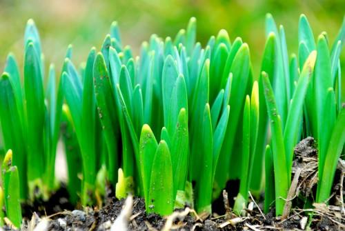 shoots growing plants