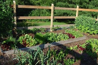 garden-400x265.jpg