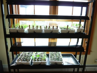 an indoor vegetable plant grow station