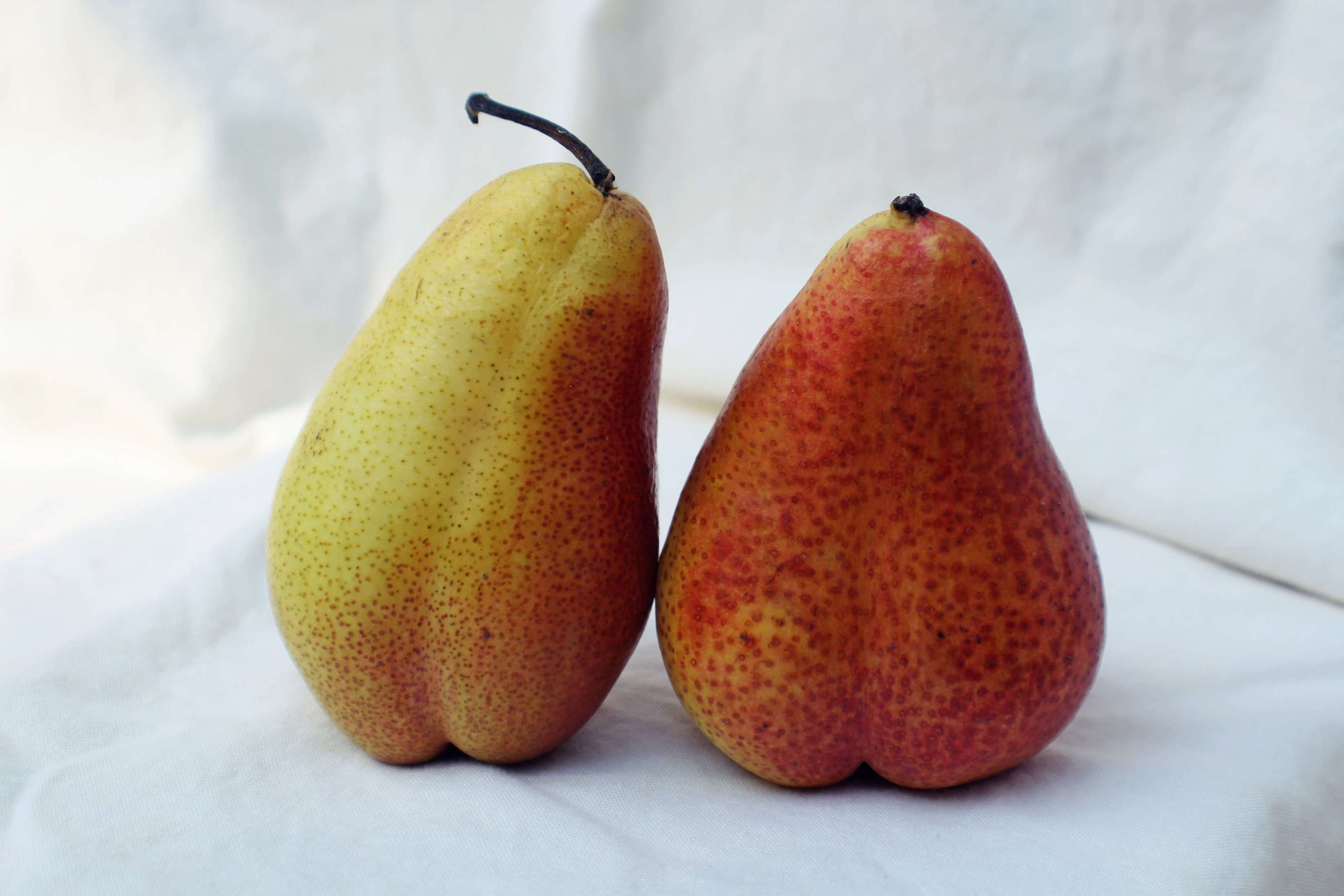 Two yellow pears sitting on a white textured background