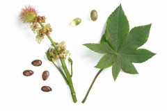 Castor oil: The awesome and the not-so-hot