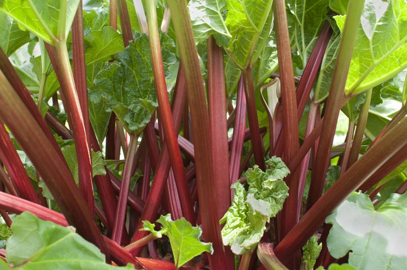 How to Make Rhubarb Juice