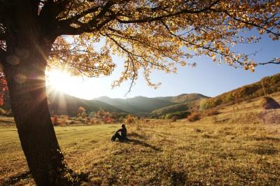 autumn contemplation