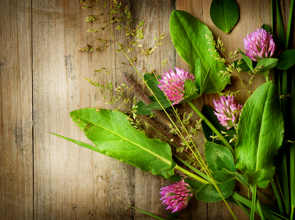 What does your Naturopathic Doctor actually do?