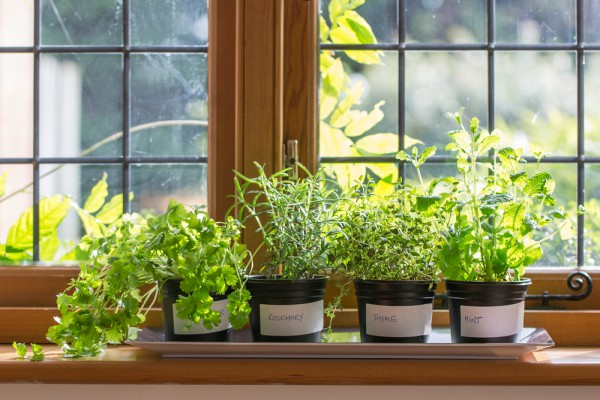 Five Healing Herbs you can Grow on your Kitchen Windowsill