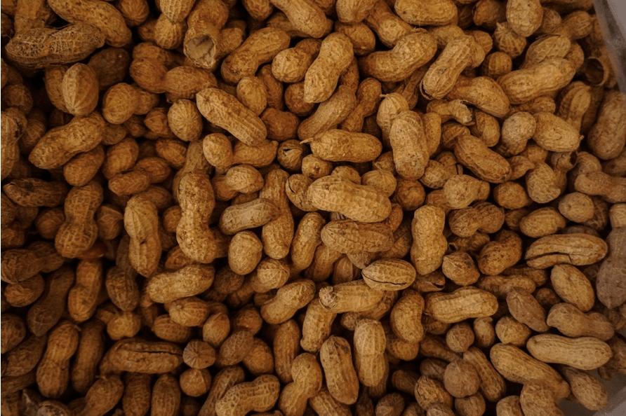 a lot of whole peanuts