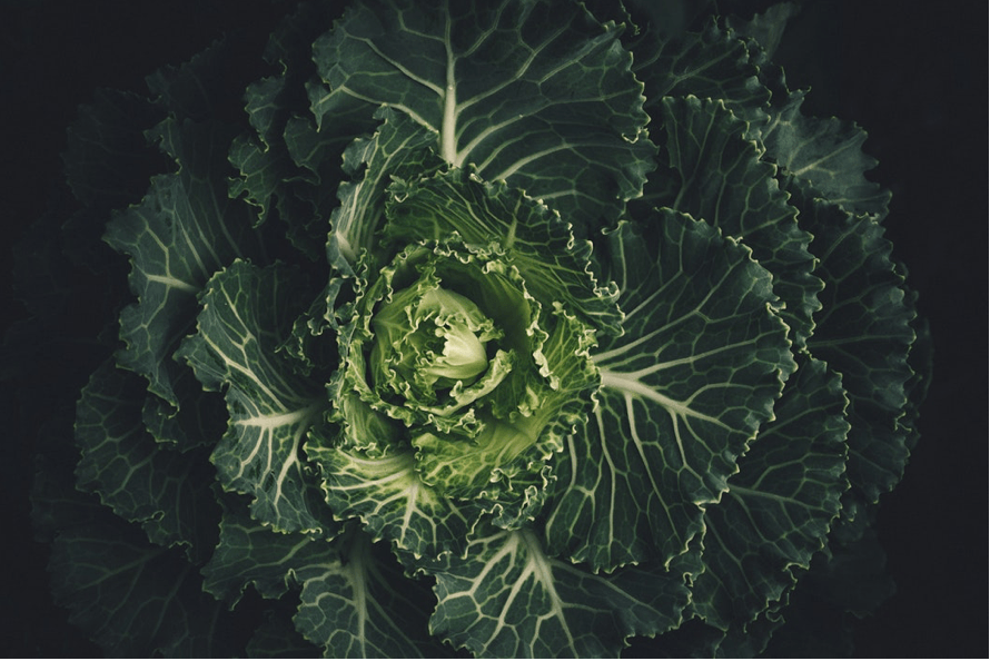 a moody close up shot of a budding head of cabbage