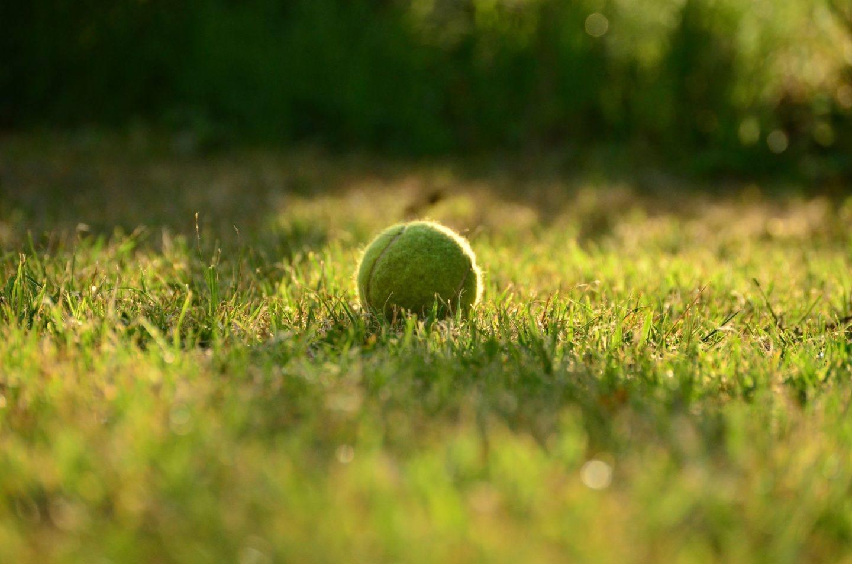 A dogs tennis ball