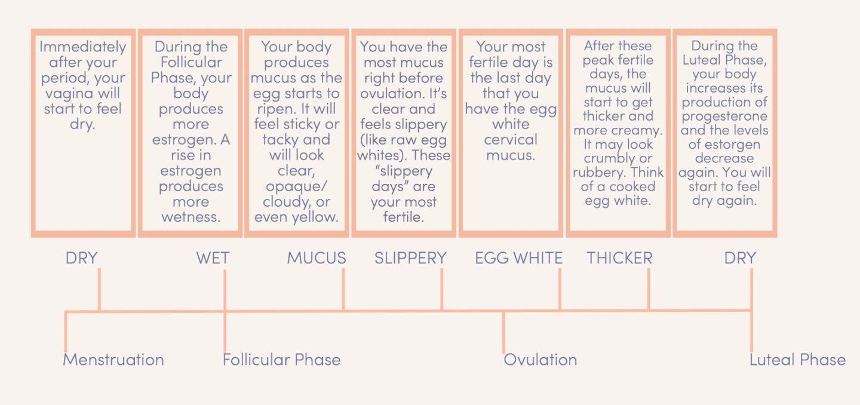 Cervical Fluid Chart