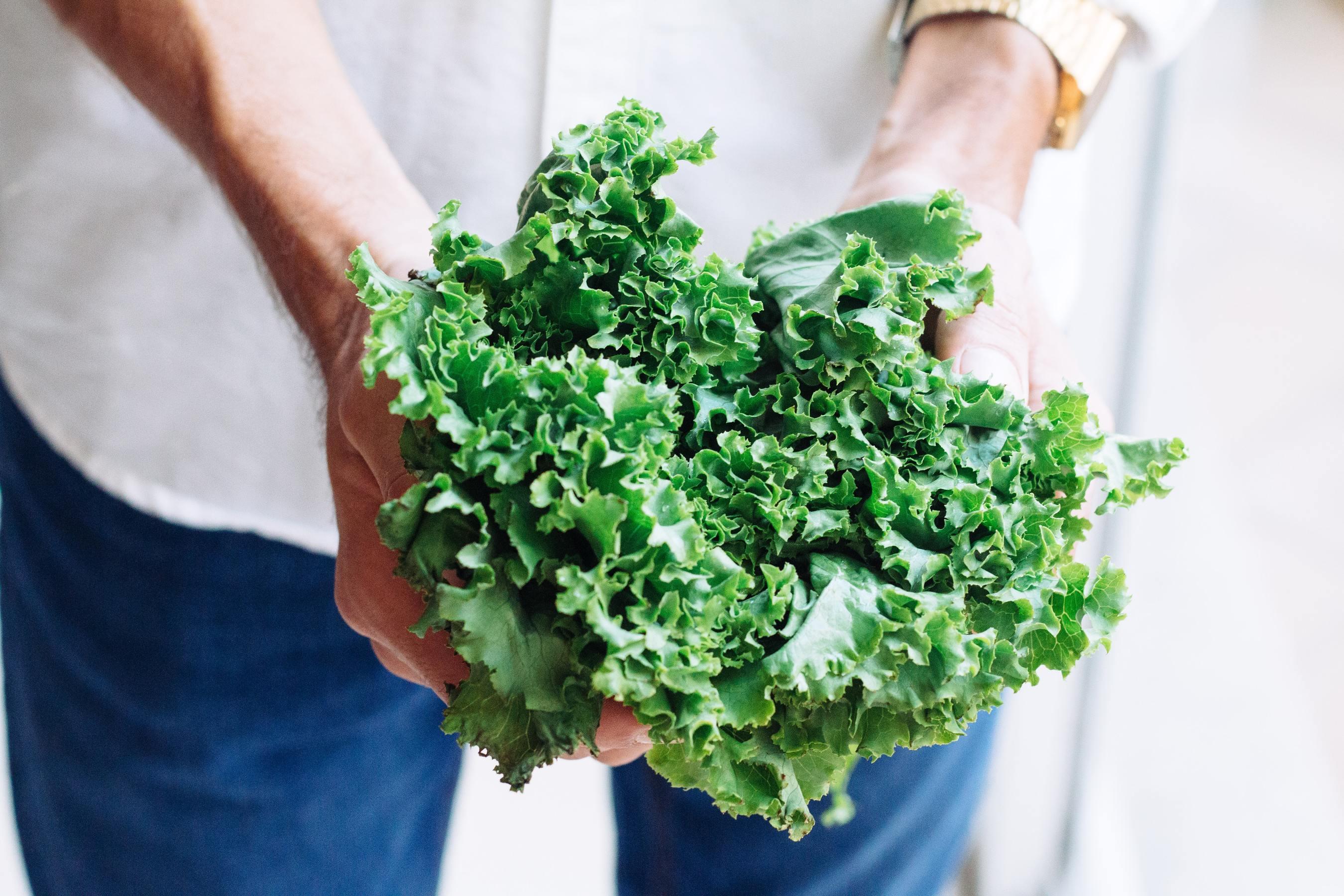 Hands holding kale